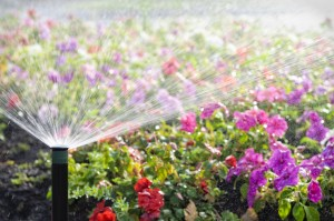 spring sprinkler set-up
