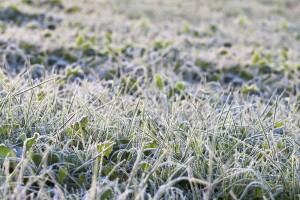 winterizing your sprinkler system
