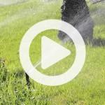 sprinkler-video-thumb