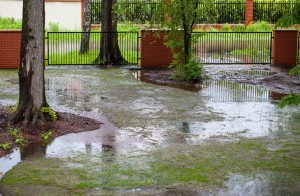 lawn after a flood