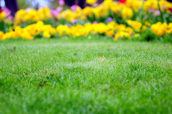 Clean Up a Wet Yard with Water-Loving Plants